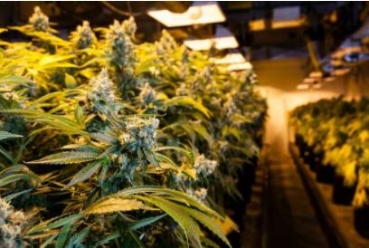 Grow Weed in a Modular Grow Room construction